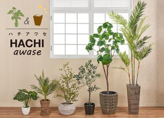 観葉植物&鉢カバー